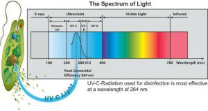 Ultraviolet light water disinfection